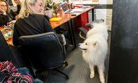 Biure šuo? Kodėl gi ne