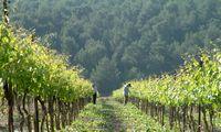 Kelionės: po Izraelį, modernaus vyno kraštą