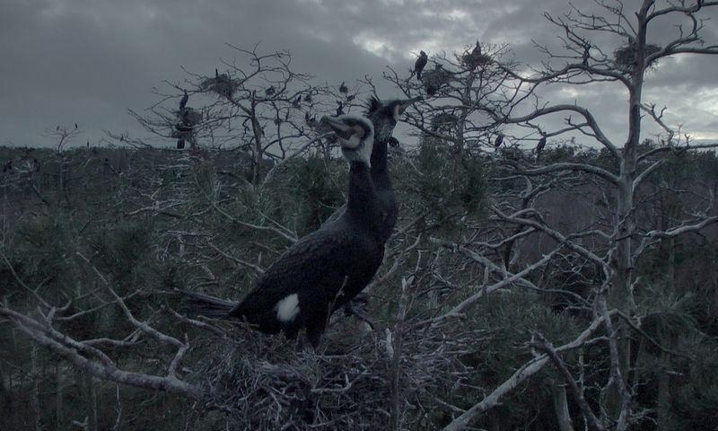 """Kadras iš filmo """"Rūgštus miškas"""" (2018), rež. Rugilė Barzdžiukaitė."""