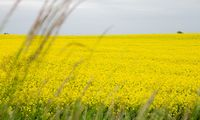 """""""Baltic Agro"""" pajamos augo, bet pelnas mažėjo"""
