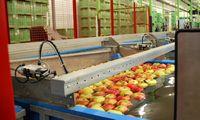 Obuolių šiemet bus daugiau, bet sulčių spaudėjai darbo dar neturi