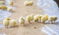 """""""Linas Agro"""" pirkinys: ūkininkai jungtuvėmis džiaugiasi, konkurentai – santūresni"""