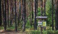EP siekia įpareigoti įmones tikrinti, ar jų prekės neprisideda prie miškų naikinimo
