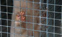Lenkijos audinių ūkiuose rasta koronavirusu užsikrėtusių žvėrelių