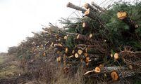 Valstybinių miškų urėdija: mediena brangsta