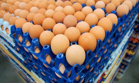 """Į Vievį padalinį perkelianti """"Europe eggs"""" atleidžia dalį darbuotojų"""