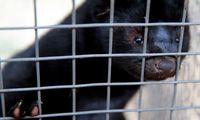 Jonavos rajone audinių ūkyje nugaišo 1.200 žvėrelių, įvesta ekstremalioji padėtis