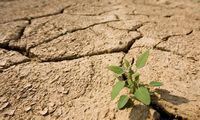 Savidraudos fondo išmokos ūkininkams augo triskart - iki 8,5 mln. Eur