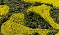 GMO: sąmokslo teorija ar mokslo pažanga?