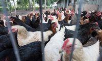 Europoje plintantis paukščių gripas pasiekė Lietuvą - fiksuotas Kauno ūkyje
