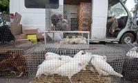 Taivanas formaliai uždraudė paukščių importą iš Lietuvos