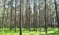 Tvarus ūkininkavimas miškuose – ateities kartoms
