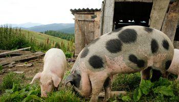 """Laukia pasiūlymų, kaip padėti tašką """"gyvulių ūkiui"""" mokesčių srityje"""