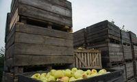 Didinama de minimis pagalbos suma pirminės produkcijos gamintojams