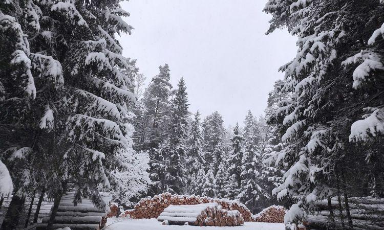 VMU: pirkėjams užtikrinama medienos sortimentų įvairovė, rangovams – darbų stabilumas