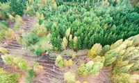 Valstybinių miškų urėdijos patirtis: jauki atmosfera įmanoma ir didžiuliame kolektyve