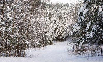 Dėl ribojimų įsigyti mišką Lietuvai gresia ES sankcijos