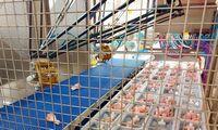 """""""Linas Agro Group"""" valdomuose paukštynuose Latvijoje įdarbino robotus"""