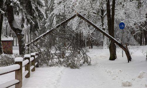 Dėl snygio Lietuvoje lūžta medžiai, dalis kelių nepravažiuojami
