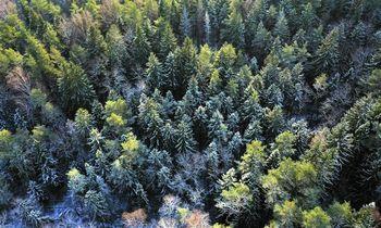 Sertifikavimo nauda miškininkystėje – tvarumas užtikrinamas visose grandyse