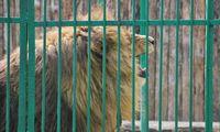 Skelbia naują konkursą Kauno zoologijos sodo rekonstrukcijai