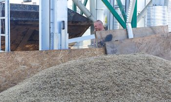 Vėl prognozuojamas rekordinis grūdų derlius