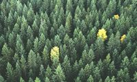 Ar apsimoka investuoti į žaliąją energetiką?