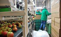 Sezoninių darbuotojų ieškančios bendrovės su užsieniečių įdarbinimu neprasideda