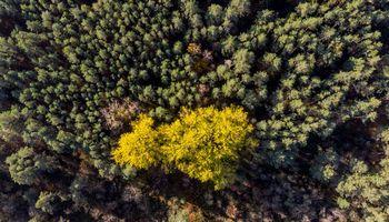"""I Asset Management"" fondas įsigijo 2.500 ha Latvijos miško"