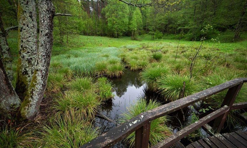 Skroblaus šaltinis Dzūkijos nacionaliniame parke. VSTT nuotr.