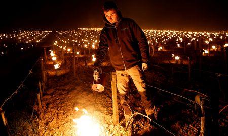 Prancūzijos vynuogynus nusiaubė šalna – prarasta trečdalis derliaus