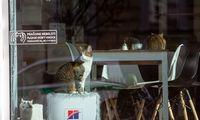 Įsigalioja privalomas gyvūnų ženklinimas mikroschemomis