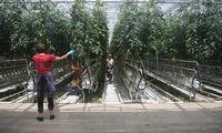ŽŪM ieško, kaip palengvinti sezoninių darbuotojų iš užsienio įdarbinimą