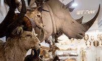 VU Zoologijos muziejus – turtuolis vargšas