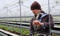 """Braškių augintoja """"Dehidra"""" išplatino obligacijų už 4 mln. Eur su 12% palūkanomis"""