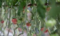 """Daržovių prekybos didmenininkė """"Domeina"""" pernai didino pelningumą"""