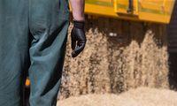 Grūdų derliaus laukiama puikaus, ūkininkai baiminasi tik kainų žirklių