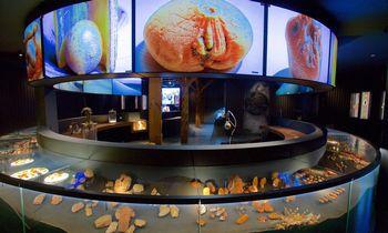 K. Mizgiris atidaro naują Gintaro muziejų Nidoje