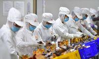"""Kinija nuo Vakarų ginsis augindama 10.000 """"mažų milžinų"""""""
