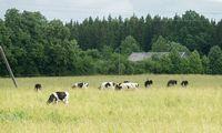 """""""INVL Baltic Farmland"""" pusmečio pelną augino 23%"""