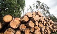 Valstybinių miškų urėdija šiemet uždirbo 24,4 mln. Eur normalizuoto pelno