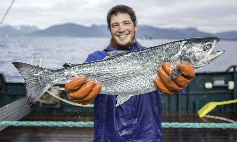 Aliaskoje sugauta lašiša, Aliaskos jūros gėrybių rinkodaros instituto nuotrauka.