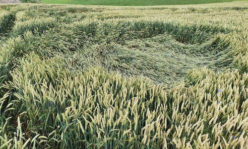 Ūkininkų nuostoliai šiemet – didesni nei pernai