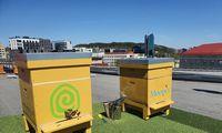 Susirūpinę bičių likimu avilius kelia miestuose ant stogų