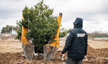 """""""Darnu Group"""" Vilniaus erdvėse pasodino beveik 1,5 tūkst. medžių, kitais metais planuoja beveik tiek pat"""